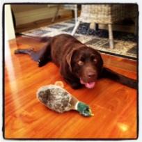 H & duck